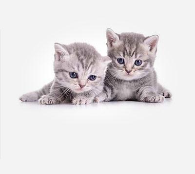 猫咪品种大全