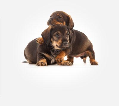 狗狗品种大全